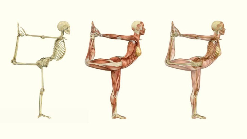 Anatomy A Basic Intro