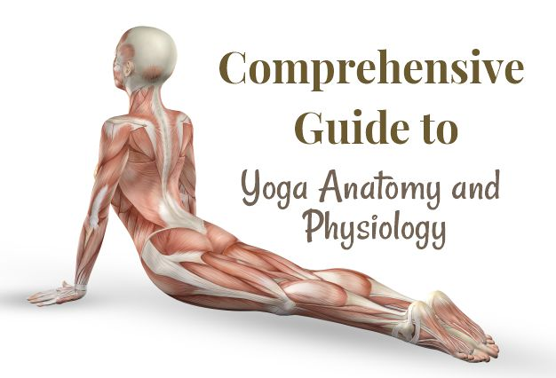 Comprehensive Guide to Yoga Anatomy and Physiology