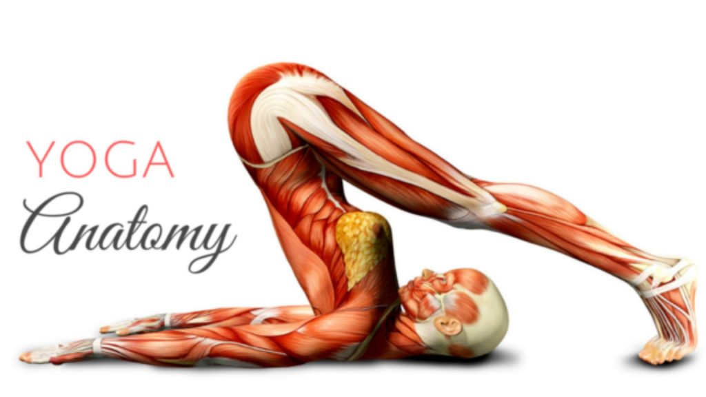 Importance of Learning Anatomy In Yoga