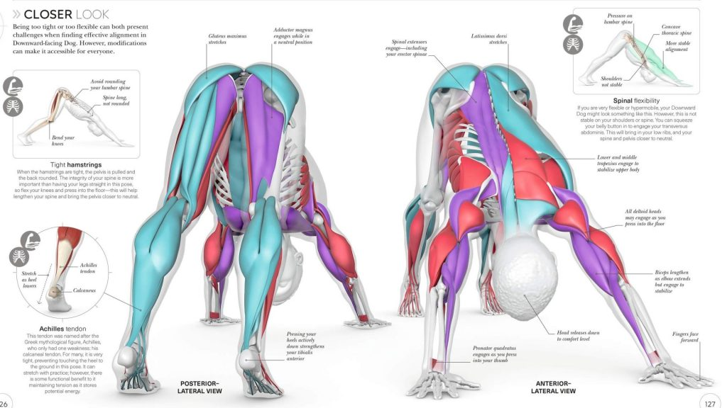 Tips for Learning Yoga Anatomy with Ease